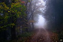 (lotl.axo) Tags: xf18135mm deutschland nebel herbst thüringen weg xt1 thüringerwald wald natur landschaft bäume germany autumn fog forest landscape nature path paysage trees woods