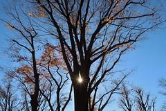 Lights (namhdyk) Tags: tree forest woods autumn winter canon canonpowershot canonpowershotg7x