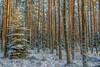 winterly forest - Winterwald (ralfkai41) Tags: woodlands farytale landscape landschaft woods forest schnee winter outdoor märchen wald natur nature ngc