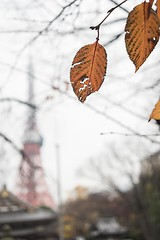 Tokyo Tower (Syahrel Azha Hashim) Tags: autumn season colorimage sony fall holiday nopeople simple sonya7m2 seasonal 2017 sonya7 beautiful travel syahrel sonyimages destination colors tokyotower trip colorfulleafs tokyo japan