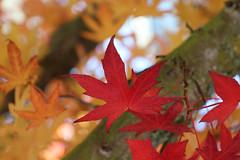 Sunny fall day (¡Carlitos) Tags: norteamerica vancouver bc falsecreek canada agua britishcolumbia northamerica water ca
