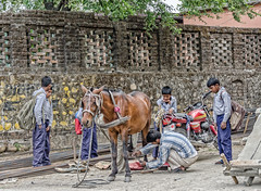 How many schoolboys does it take to shoe a horse? (Pejasar) Tags: boys mammal horse animal shoe gather group watch entertainment schoolboys students schooluniform newdelhi india