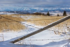 Powering through (Tracey Rennie) Tags: fence cochrane winter alberta mountains rockies barbedwire rockymountains