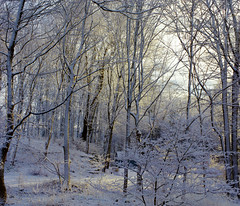 A snowy Christmas morning (Violet aka vbd) Tags: pentax k3 vbd hdpentaxda35mmf28macrolimited ct connecticut tree trees newengland snow winter dawn 2017 winter2017 christmas christmasday handheld manualfocus trumbull woods sunlight