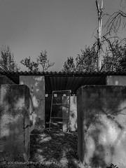 Escape (eX-Base Photography) Tags: bird gauteng southafrica za