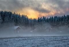 Frost Mist (bjorbrei) Tags: winter frost mist misty snow sky clouds sunset evening field countryside farm maridalen oslo norway spruces