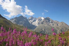 La Meije (TomCombal) Tags: meije glacier lautaret alpes montagne paysage snow ice mountain france