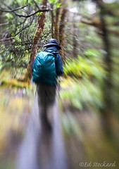 A Lensbaby Day (Ed.Stockard) Tags: rain wet tropical oneofthewettestplacesonearth hike raingear alakaiswamptrail kauai hi hawaii
