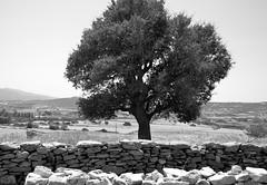 DSC_0204 (Gveronis) Tags: greece greekisland ancientgreece sun sea gveronis gveronisphotography hellas ellada nature