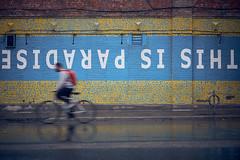 This is Paradise (imalonerdottiearebel) Tags: toronto cyclist bike paradise street x100t fujifilm inspirational water rain wall movement city canada fall
