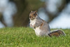 Who are you looking at? 500_4904.jpg (Mobile Lynn) Tags: nature rodents squirrel wild fauna mammal mammals rodent rodentia wildlife reading england unitedkingdom gb coth coth5 ngc