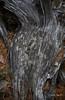 Contours (I) (Modesto Vega) Tags: nikon nikond600 d600 fullframe tree treetrunk fallentree drytree wood forest pineforest needles pineneedles drypineneedles texture curves contour