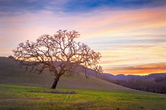 PASO ROBELS CALIFORNIA (LOURENḉO Photography) Tags: view art dream people wine country sunrise california pasorobels paso robels dreamy photo landscape coast coastal field visit hwy 101 hyw101 hills tourist dreaming trip farm winery love usa