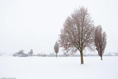 Winter Monotony (++sepp++) Tags: landscape landschaft landschaftsfotografie schnee winter graben bayern deutschland de snow bavaria germany lechfeld bäume trees highkey