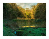 ON GOLDEN POND (Barry Haines) Tags: lost valley of heligan cornwall sony a7r2 a7rii voigtlander 65mm macro apo lanthar flickrsbest