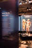 Skin Man, Body Worlds Pulse, California Science Center (InSapphoWeTrust) Tags: bodyworlds california californiasciencecenter expositionpark losangeles northamerica usa unitedstates unitedstatesofamerica plastinate plastination us