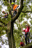 20170729-itcc--104938-2jpg_36296061475_o (ITCCAdmin) Tags: arboretum isa arboriculture arborist competition treeclimbing
