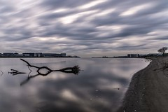 Driftwood (dayonkaede) Tags: driftwood river cloudy quiet morning beach landscape nature nikon d750 2401200mm f40