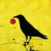 Merry Christmas (1crzqbn) Tags: sliderssunday bird ball red yellow 1crzqbn