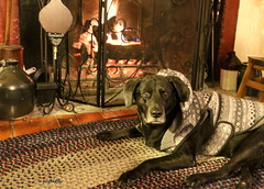 let's stay toasty (Judecat (settling in for the winter)) Tags: blackdog blacklabradorretriever labradorretriever canine raven fireplace warm cozy