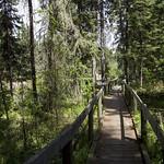 Boardwalk portion of the Waskesiu River Trail, Prince Albert National Park thumbnail