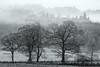 Misty (amcgdesigns) Tags: rafford scotland unitedkingdom gb andrewmcgavin forres trees monochrome blackandwhite silverefex local landscape misty eos7dmk2 scottishweather scottishlandscape weather cold