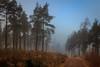 Misty Track (Noel Wyn Davies) Tags: scotland sidlaws angus perthshire mist trees woods track winter
