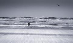 Rushing (Bruus UK) Tags: cornwall mawganporth atlantic girl alone surf storm ocean breakers bird gull seagull rushing force nature marine coast beach cornwallliving raw surge newquay wading riptide danger