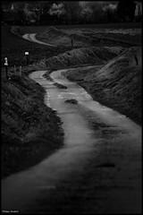 Domfront en Champagne (Sarthe) (gondardphilippe) Tags: domfrontenchampagne sarthe maine paysdelaloire chemin way route road monochrome noiretblanc blackandwhite bw