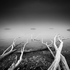 Craving for water (andreasbrink) Tags: angera italy landscape winter bruschera bw fog lagomaggiore mist minimalism
