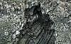 Kittiwake / Ritur (Rissa tridactyla) in the cliffs of Snæfellsnes, Iceland (thorrisig) Tags: 15072017 arnarstapi kittiwake mávur rissatridactyla snæfellsnes bjarg máfarmávar rita sjófugl stuðlaberg sigurgeirsson sigurgeirssonþorfinnur dorres iceland ísland island icelandicnature íslensknáttúra landscape nature náttúra thorrisig thorfinnursigurgeirsson thorri þorrisig thorfinnur þorfinnur þorri þorfinnursigurgeirsson birds animals cliffs
