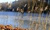 Schilfrohhr am winterlichen See (Heidi zu Klampen) Tags: winter frost eis see schilfrohr sonne lietzensee berlin sonnenschein schilf wasser pflanzen