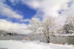❄️☃️❄️ (gusdiaz) Tags: mountains smoky great nc lake water reflection cold waterscape canon canonphotography nature naturephotography trees foliage white blue clouds cielo lago reflejo agua otoño autumn fall beautiful relaxing