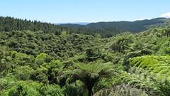 2017-110723 (bubbahop) Tags: 2017 rotorua newzealand waimangu volcanic valley