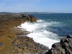 57 (outandaboutindevon) Tags: torquay devon coast path cliffs downs babbacomb ellacomb oddicomb cockington thatch palm tree sea shore thatchers rock beach