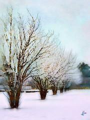 2013 - Grand parc d'Enghien - Janvier (bDom [+ 3.8 Mio views - + 47K images/photos]) Tags: bdom enghien parc arbres neige hiver art aquarelle dessin sketch jixipix