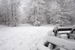 Winter Wonderland (Kitty Terwolbeck) Tags: netherlands veluwe veluwezoom nationalpark nationaalpark sneeuw snow winter woods forest trees hiking wandeltocht wandeling wandelen walking cold snowy landscape nature hikers wandelaars
