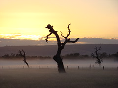 Sunrise (iainken) Tags: tree sunrise mist atmospheric hills scenic creepy field fog cloud
