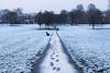Walk this way (sarah_presh) Tags: aldershot snow hampshire manorpark park manor england snowy white green grass footprints nikond750 nikon24120 outdoors