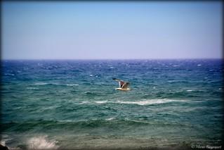 Vol au-dessus d'une mer agitée