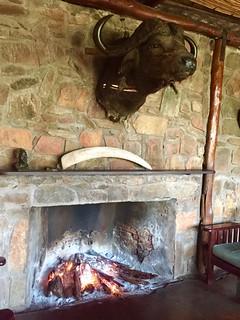 Zimbabwe Cape Buffalo Hunt 43