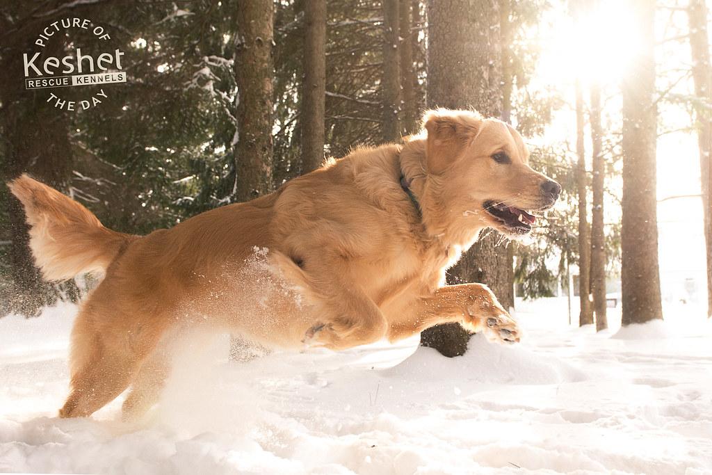 Rescue Dogs Ontario Ottawa