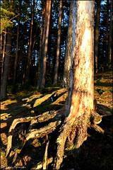 DSC_7054 (facebook.com/DorotaOstrowskaFoto) Tags: rejów skarżyskokamienna zalew zalewrejowski plaża drzewa woda świętokrzyskie poland spacer