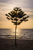 sunset at pattaya beach (Flutechill) Tags: sea sunset beach nature tree palmtree tropicalclimate summer sky silhouette sunlight sun coastline vacations dusk outdoors landscape idyllic scenics island pattaya thailand