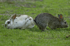 Rabbit 12 (Largeguy1) Tags: approved rabbit 12 animal tamron150 600mm lens canon 5d mark iii