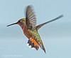 Hummer (jimgspokane) Tags: hummingbirds hummers birds wildlife idahostate camping countryroads otw naturewatcher