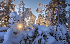 Enchantment of Lapland (Jyrki Liikanen) Tags: lapland experience real finland northernfinland arcticweather arctic winter winterwonderland winterland midwinter snow snowylandscape snowytrees snowyscenery snowymountains sun sunbeams sunset forest inthewoods fell deadwood cold coldness coldbeauty coldscenery windchill ice snowpatterns sunshine blue blueandwhite bluesunset