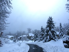Snow Storm (Stanley Zimny (Thank You for 27 Million views)) Tags: snow storm winter white road street seasons tree