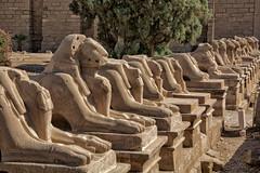 Templo de Karnak (Porschista) Tags: karnak egipte templo temple carneros esfinges