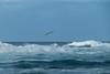 free flying (zoomseb) Tags: strand waves wellen brandung moving grooving water wasser cotillo fuerteventura urlaub holiday wind windy